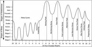 productive day - circadian rythm